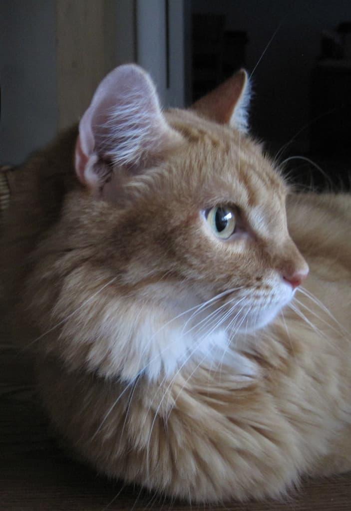Newton Profile