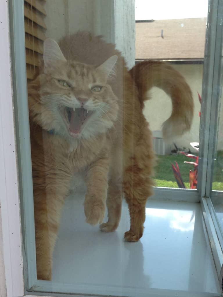 Newton In the Window Big Mouth