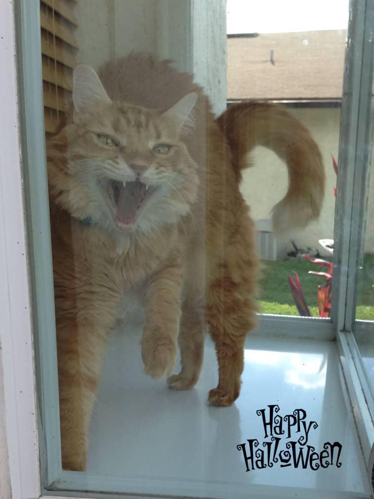 Newton In the Window Happy Halloween copy