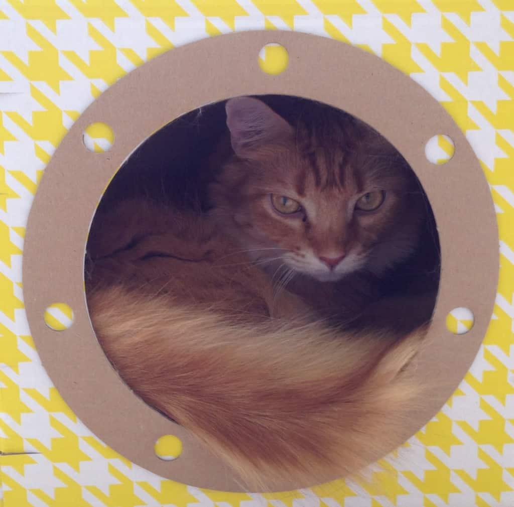 Newton in Yellow Submarine