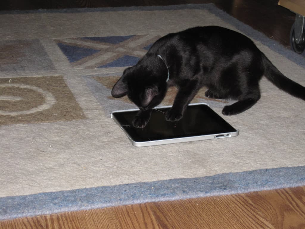 Beau and iPad 02