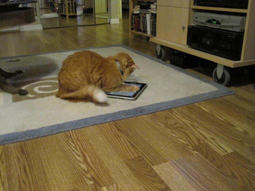 Newton iPad 001