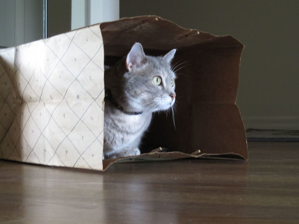 Pierre and Paper Bag 06_sm