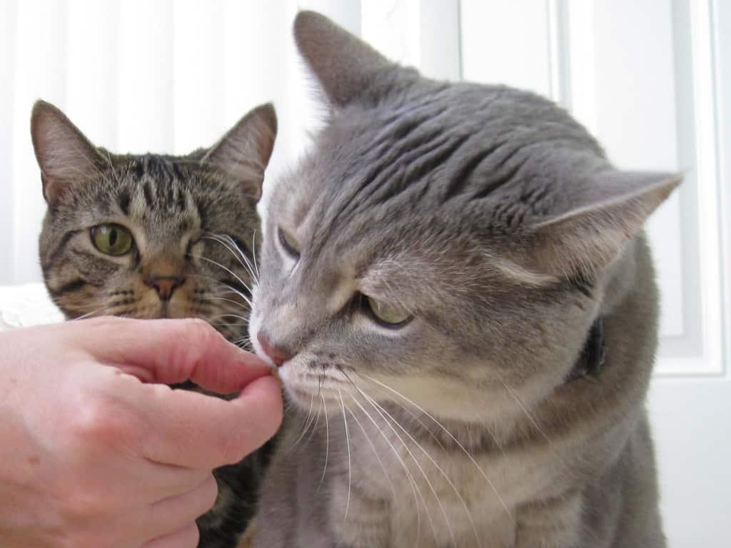 Ashton is Jealous of Pierres Treat