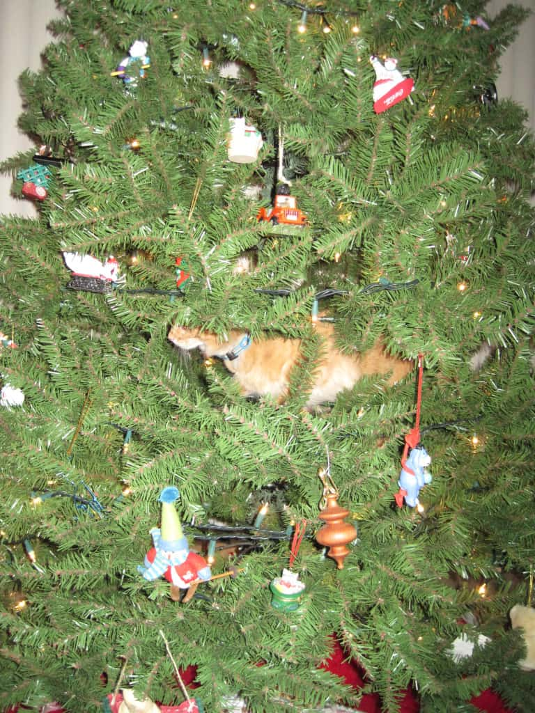 Naughty - Newton halfway up the tree 11-29-2009