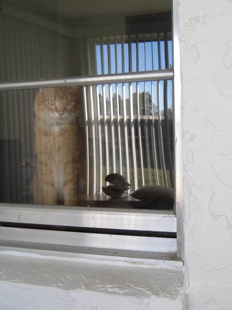 Newton_stares_out_window_into_sunroom