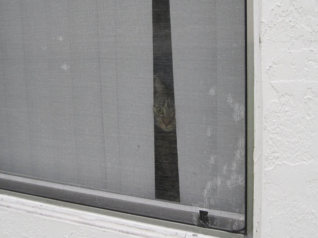 Ashton_peeks_out_blinds02_sm