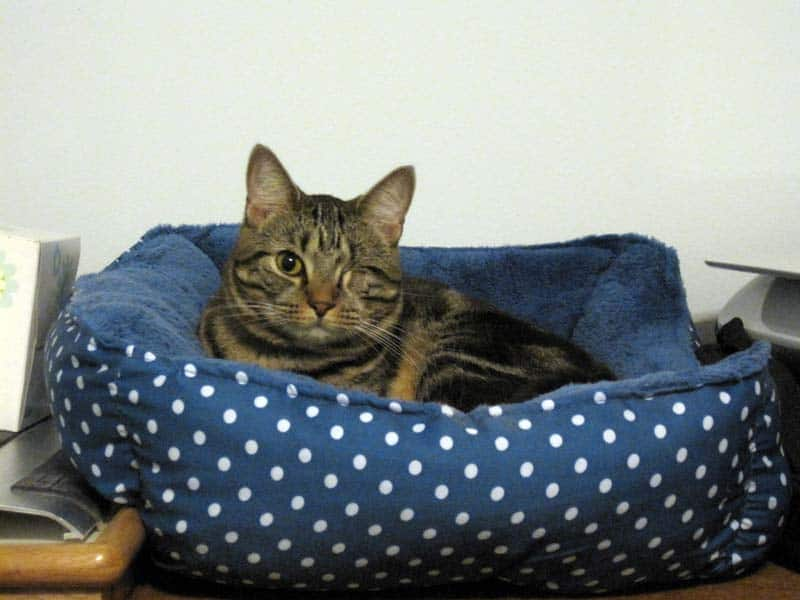 Ashton in the cat bed_sm