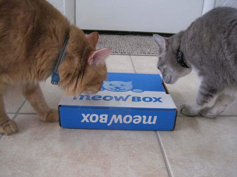 MeowBox_sm02