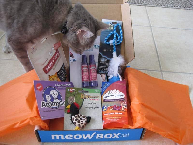 MeowBox_sm18