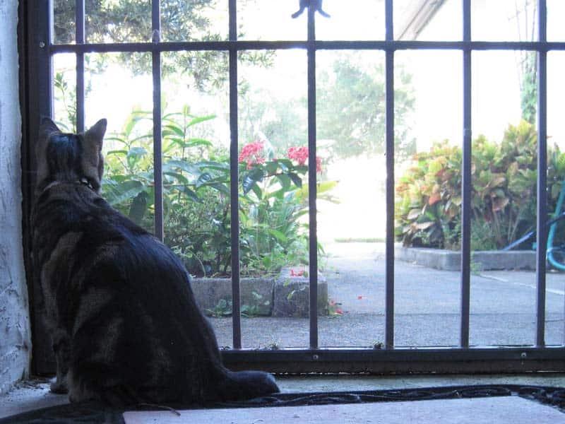 Ashton looks out of porch