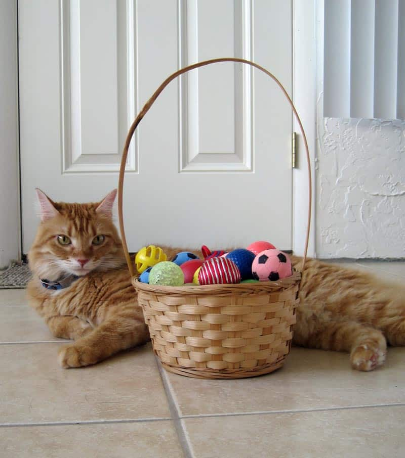 Newton with basket full of cat toy balls