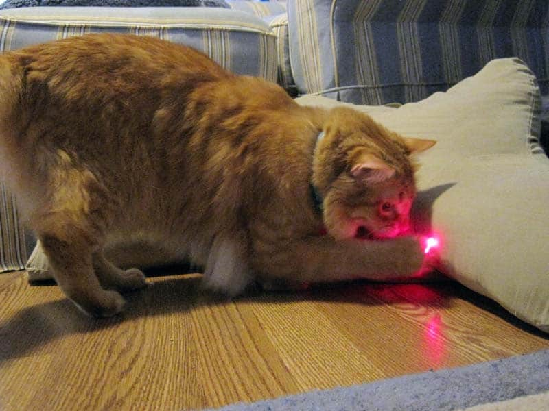 Newton and the red dot