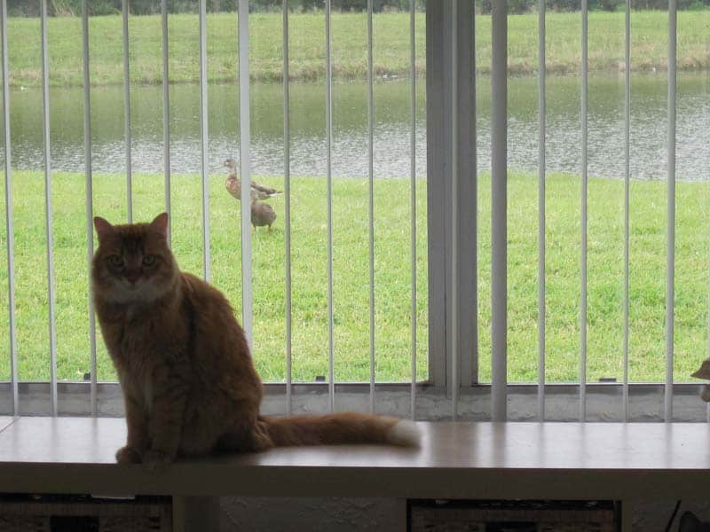 Newton_bird_watching03_sm