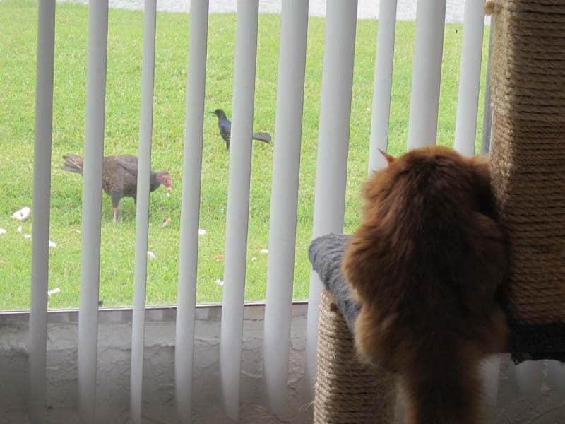 Newton_bird_watching07_sm