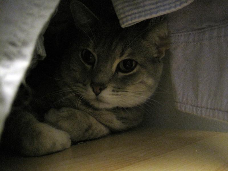 Pierre in the closet