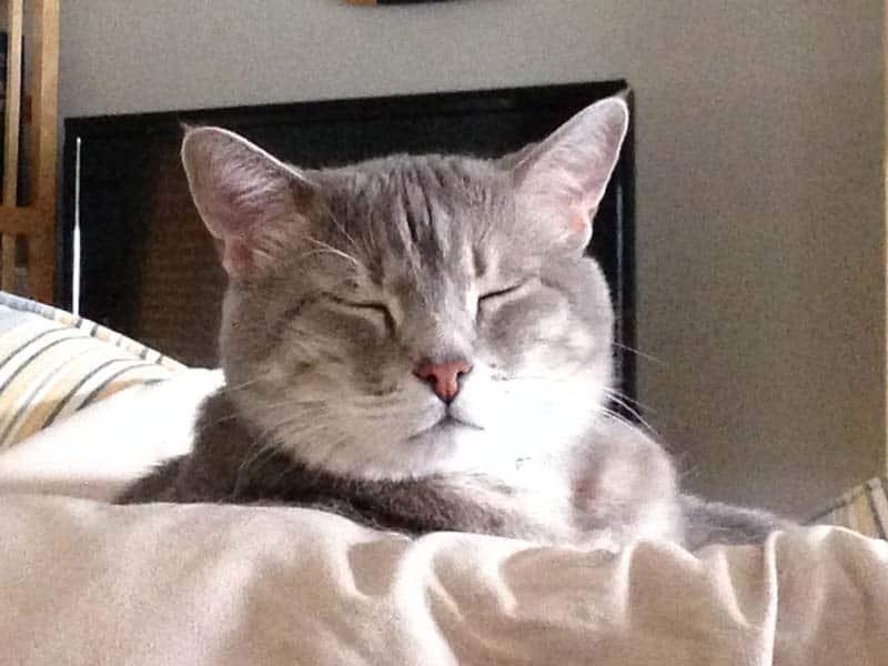Pierre_Falling_asleep03_sm