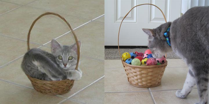 Pierre_basket_then_and_now