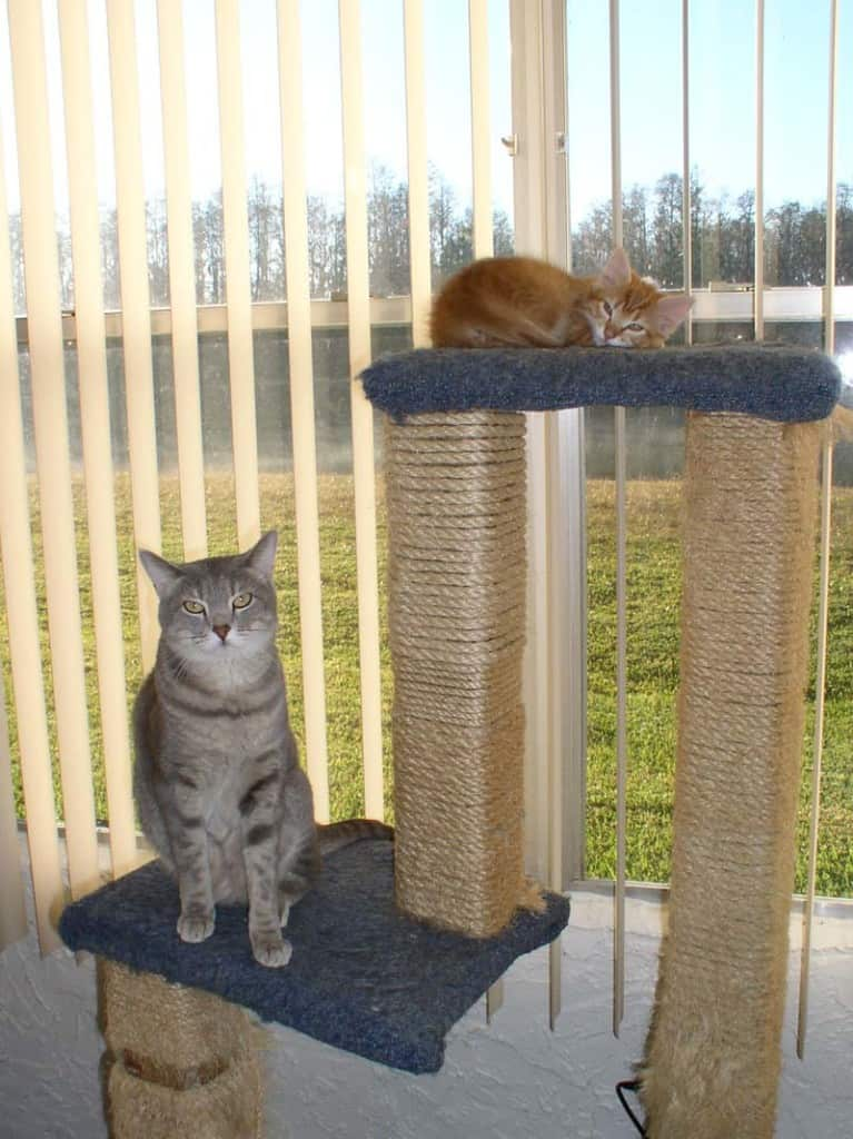 Newton and Pierre on Cat Tree