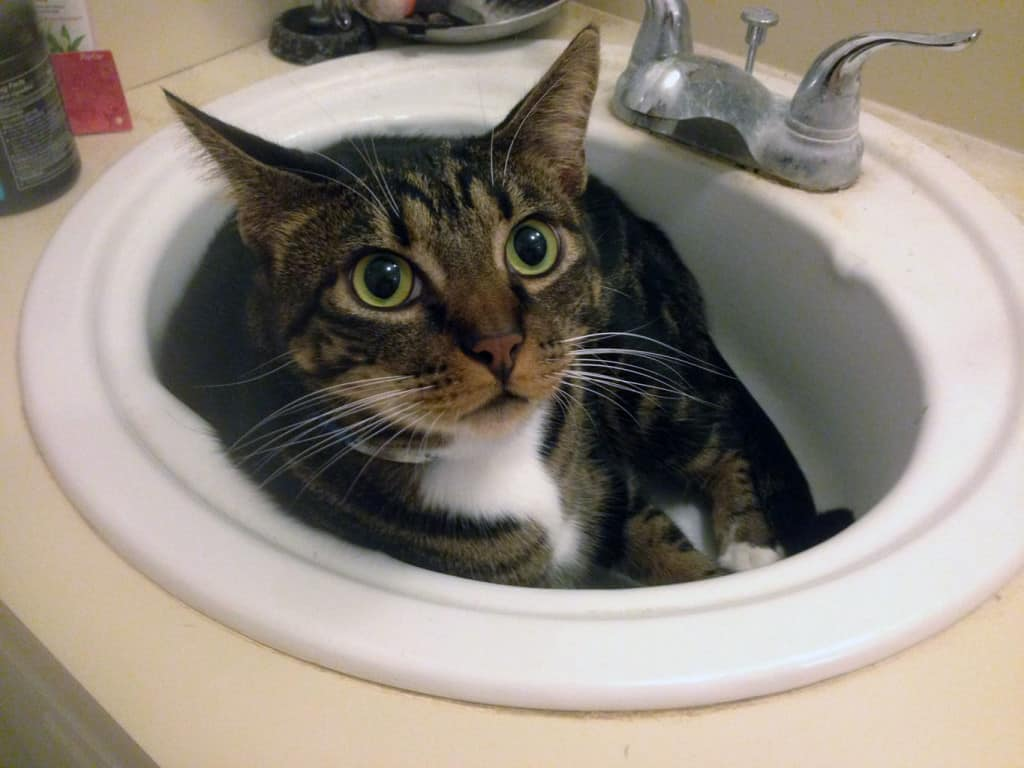 Shep in the sink