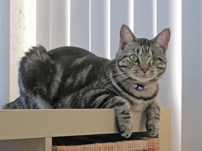 Ashton Sits on End of Shelf