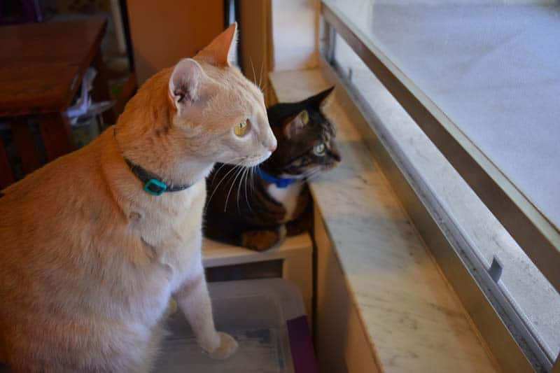 Earl_and_Shep_look_out_window_sm