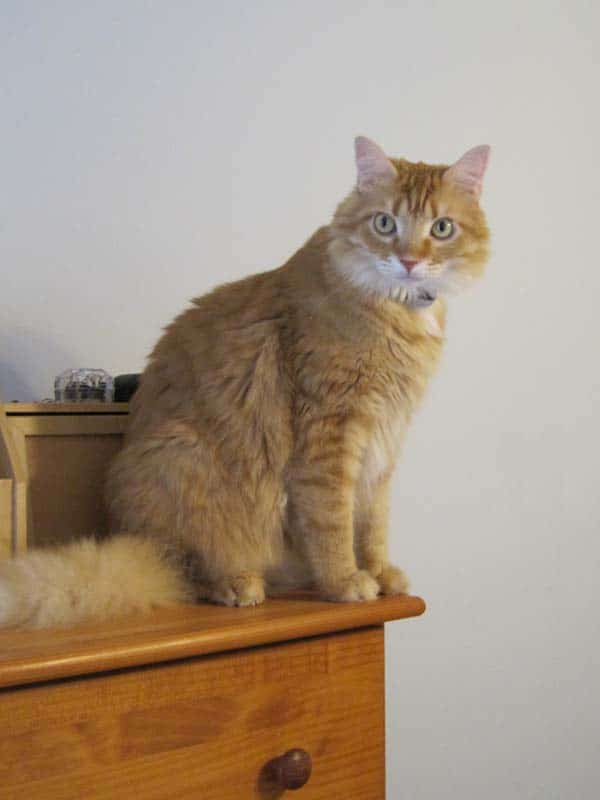 Newton perches on dresser