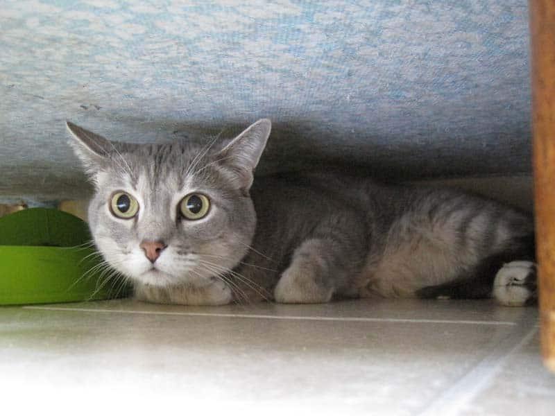 Pierre_hiding_under_sofa_sm