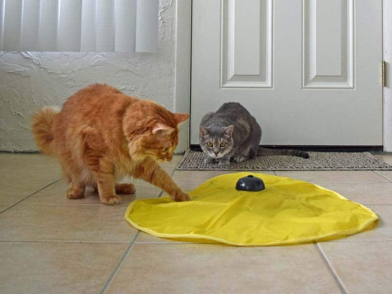 04_Newton_attacks_saucer_toy_first_sm