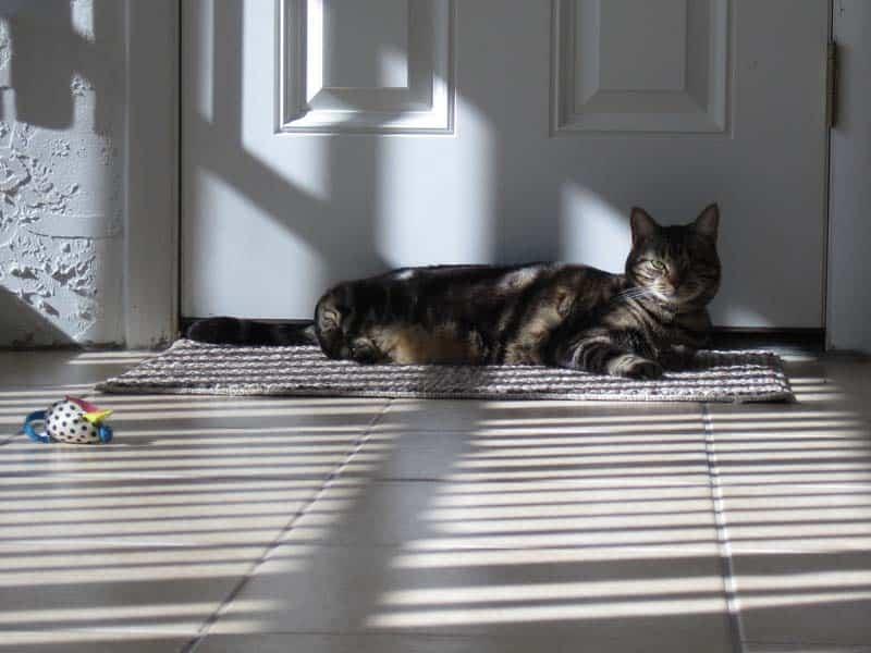 Ashton_in_sun_puddle_stripes