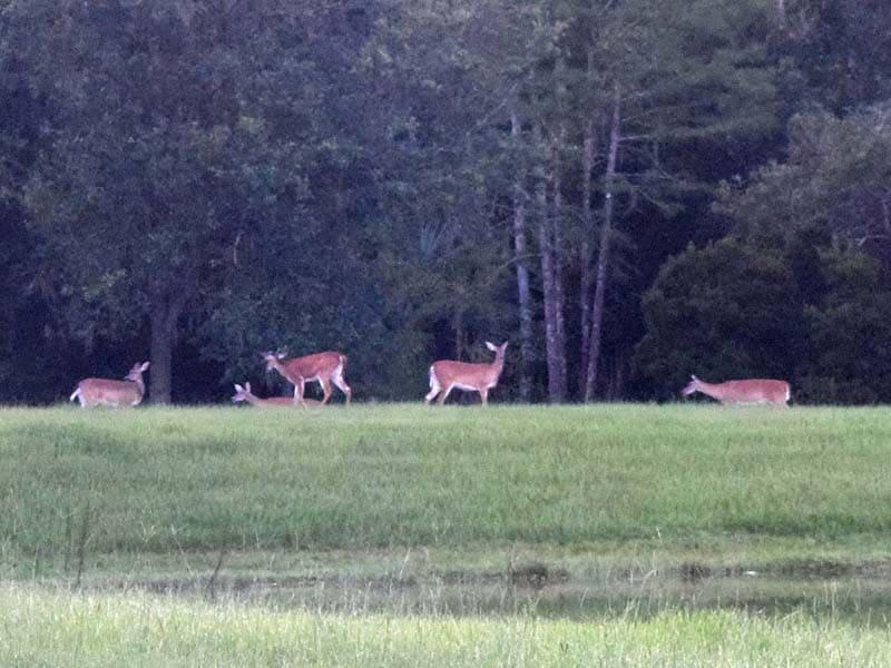 Deer_across_pond_sm_02