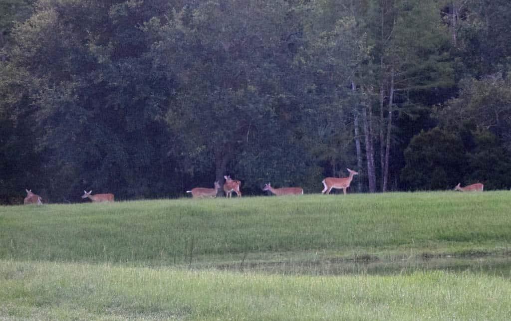 Deer_seven_across_pond_sm