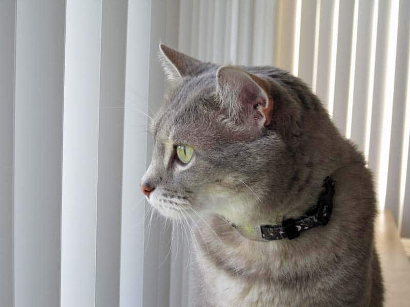 Pierre Looking out Window Blinds