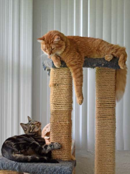 Ashton_Newton_cat_Tree_05_Sm