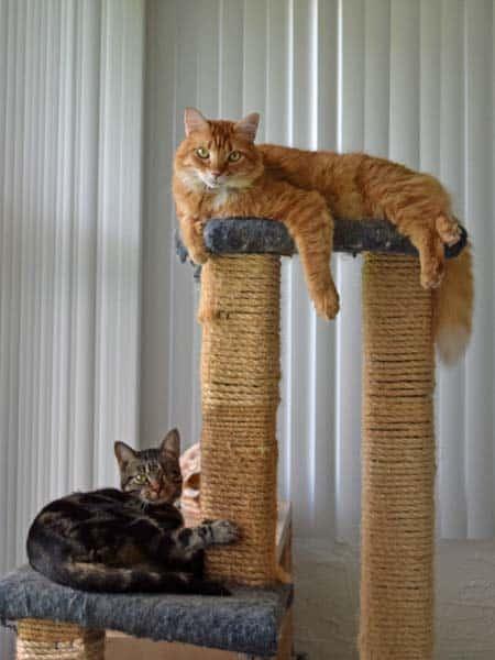 Ashton_Newton_cat_tree_01_sm