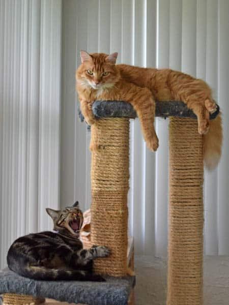 Ashton_Newton_cat_tree_02_sm