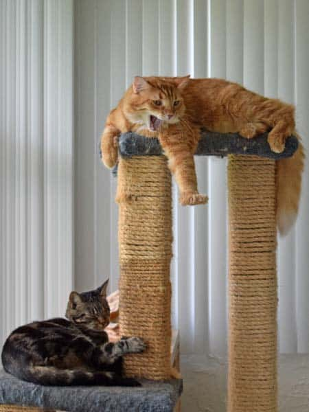 Ashton_Newton_cat_tree_03_sm