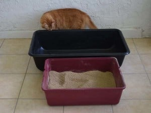 Newton inspects mortar mixing tray next to his litterbox