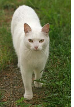 white_cat_L