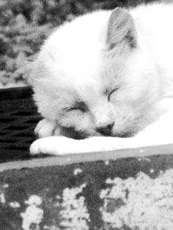 white_cat_greenhouse