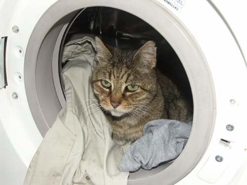 kitty in washer