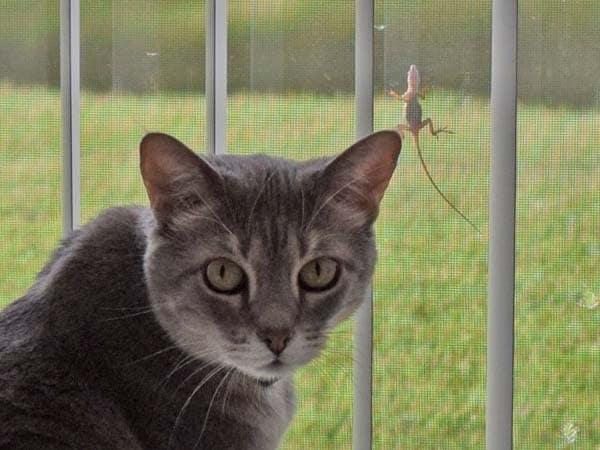 Pierre with a lizard on the window screen behind him