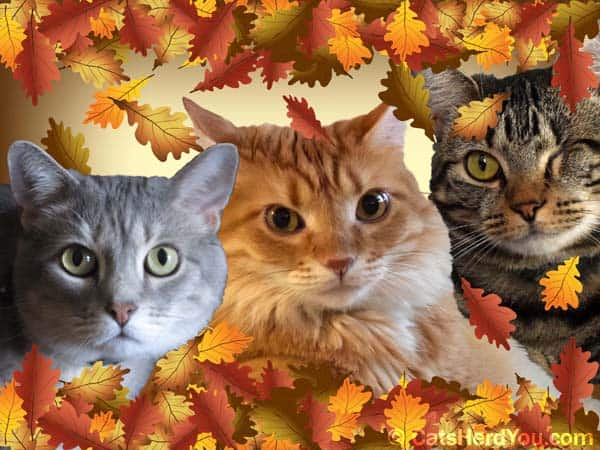 Happy Thanksgiving from Sometimes Cats Herd You