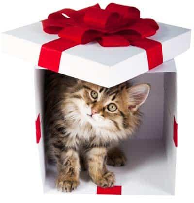kitten inside gift box