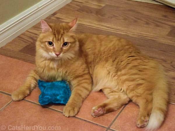 Newton_and_tiedye_catnip_01_wm