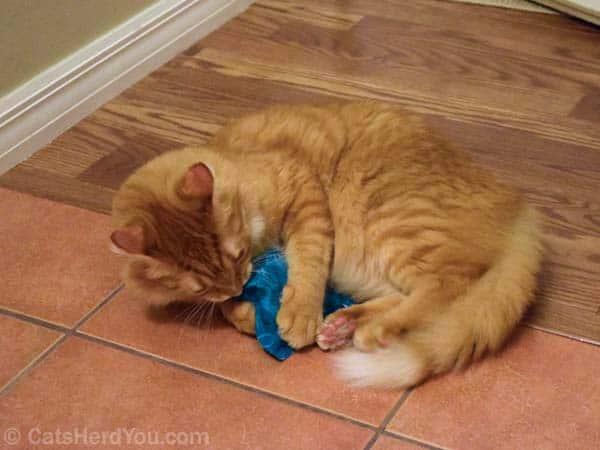 Newton_and_tiedye_catnip_02_wm