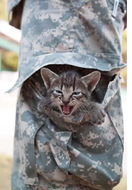 Kitten in Army Pocket