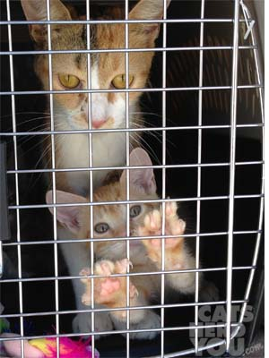 2_cat_transport_xsL