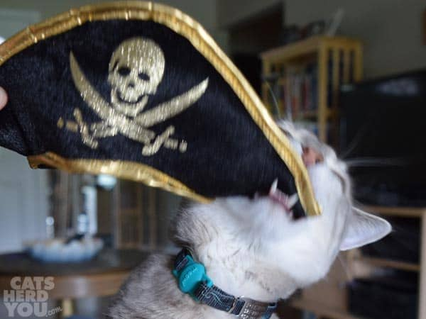 Pierre_doesnt_like_pirate_hat_03_wm