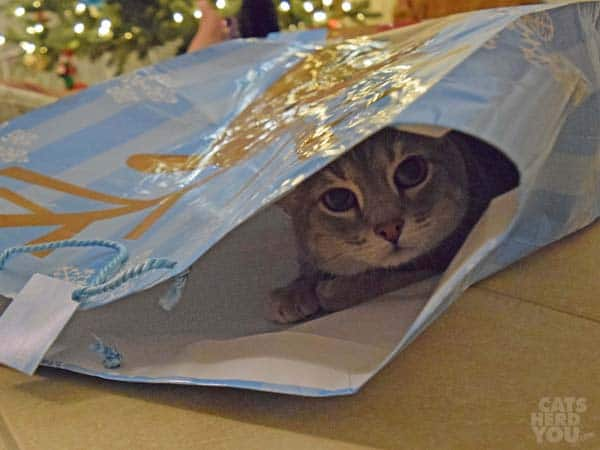Pierre hides in a large, decorative gift bag